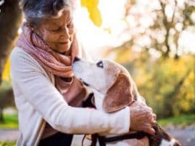 convenio pet para animais idosos Saúdepets