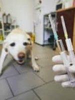 Assistência Pet Saúdepets
