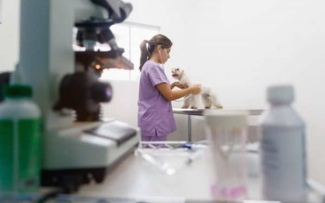 clínica veterinária plano de saude Saúdepets